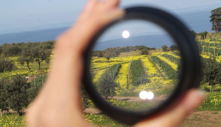 Дегустиция вин Сицилия -