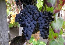 винодельни и виноградники отдых на сицилии - обед этна
