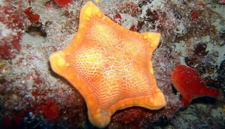лучшие курсы дайвинга - море сицилии