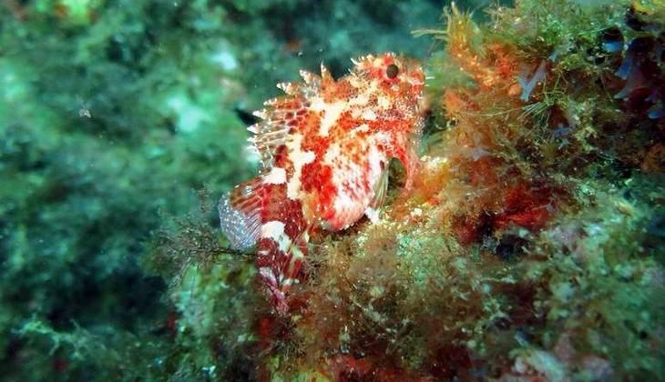 сноркелинг сицилия - море сицилии