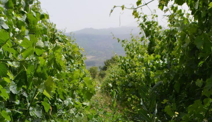 дегустация вина сицилия - лучшие вина сицилии