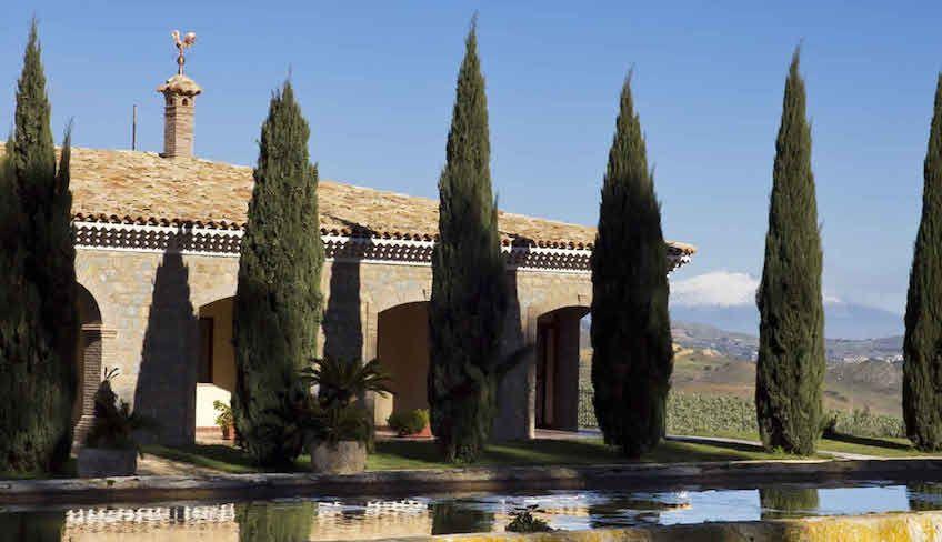 вино с сицилии италия - белое вино сицилия