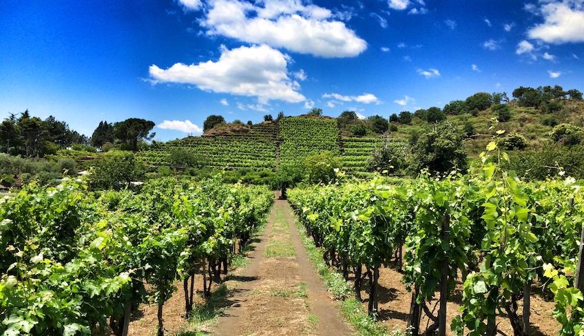 сицилия винные сорта винограда вино сицилия традиции лучшие винодельни на сицилии этна