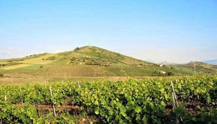 сицилия винный магазин - лучший виноград сицилии