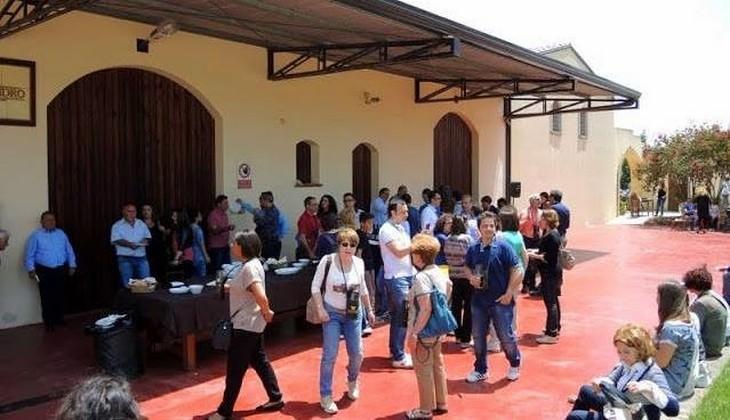 сбор винограда сицилия - вино зибиббо сицилия