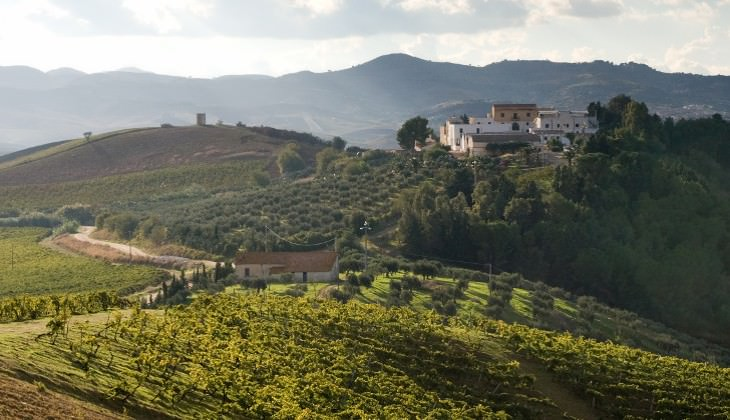 вино сицилия - вино посетители сицилия