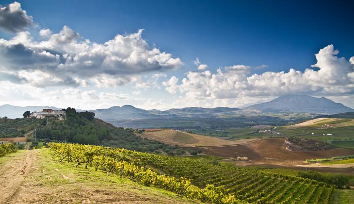 вино сицилия вино посетители сицилия дегустации опыт