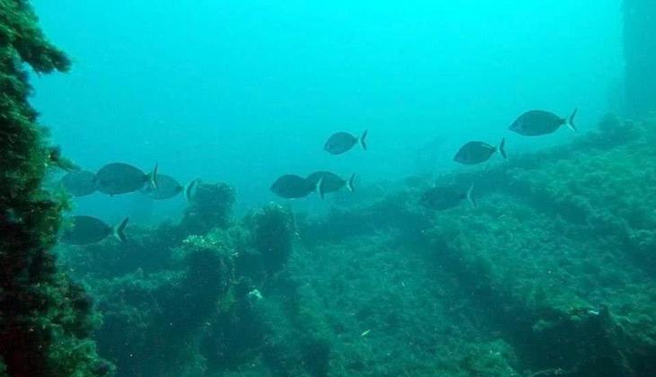 подводные погружения водный спорт лучший SCUBA-дайвинг Марсала