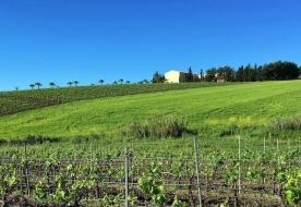 тур на винодельню - сицилийское вино