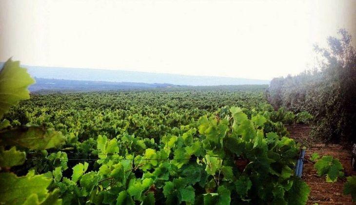 лучшие туры дегустации вина - опыт дегустации вина