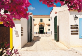 винодельни и виноградники отпуск на сицилии - курорт палермо