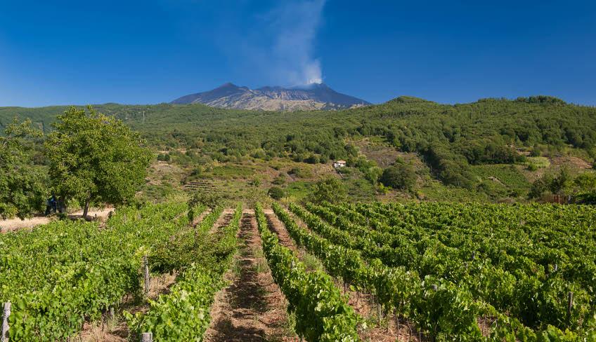 дегустация вин винный тур Этна