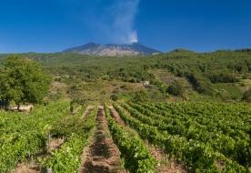 Дегустация вин Этна - Этна винный тур