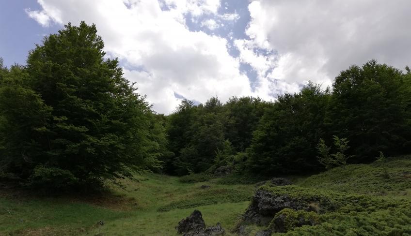 Etna bosco