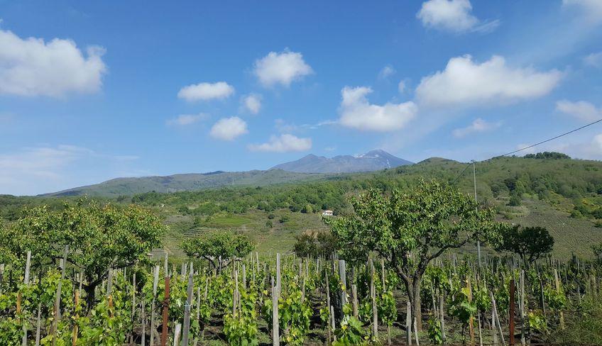 Этна дегустация вина этна вино этна винный тур