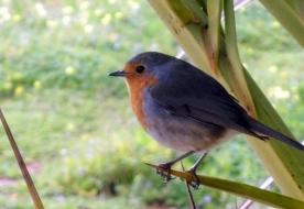 перелетные птицы - наблюдение за птицами