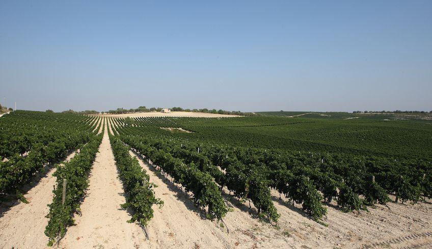degustazione vini noto -