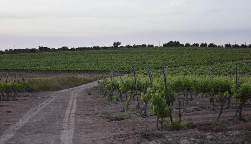Дегустация вин в Ното -